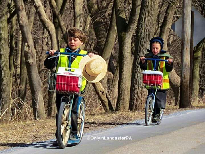 Heafing home aftet school. Amish students are known as scholars