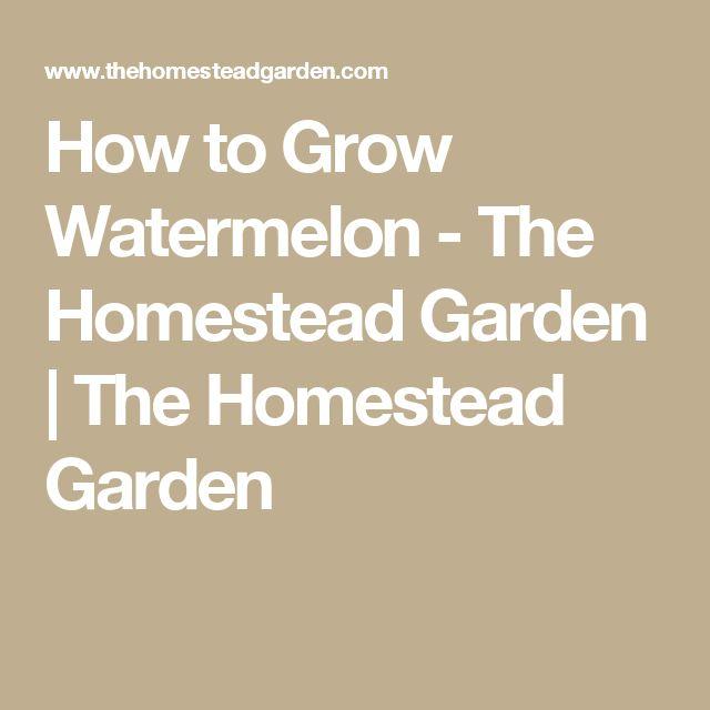 How to Grow Watermelon - The Homestead Garden | The Homestead Garden