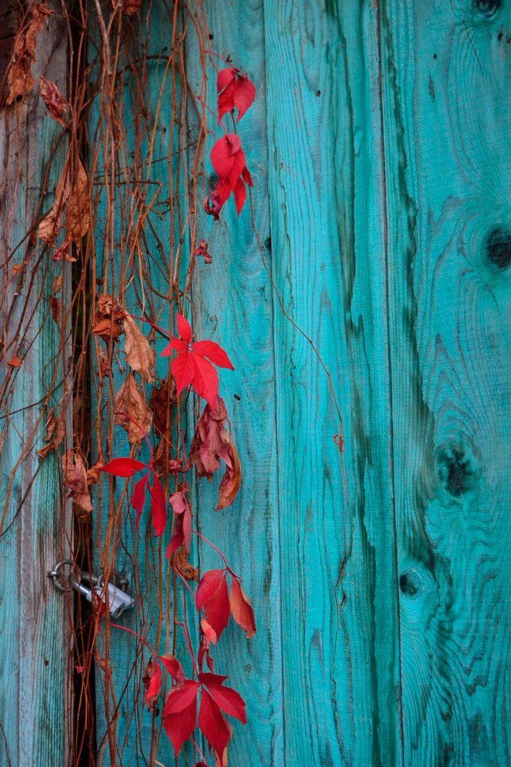 Turquoise Autumn - the contrast is gorgeous!