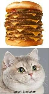 2502be5a7010b303692b0c17fed94fa8 fat cat meme cat memes 35 best cat memes \u003c3 images on pinterest business cat meme, cat