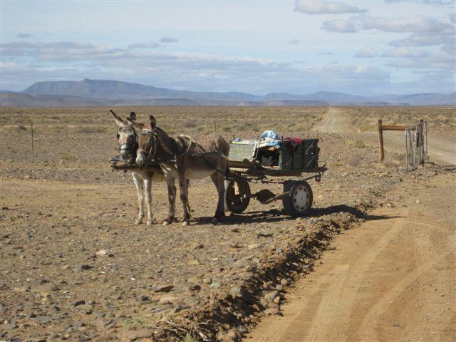 Public transport at the Tankwa Road Stall