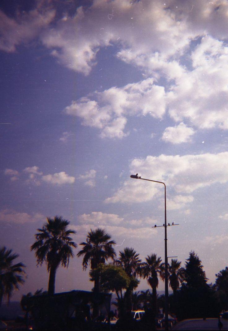 Kuşlar uçuyor...      #lomography #dianaf