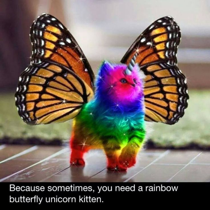 Because sometimes, you need a rainbow butterfly unicorn kitten...