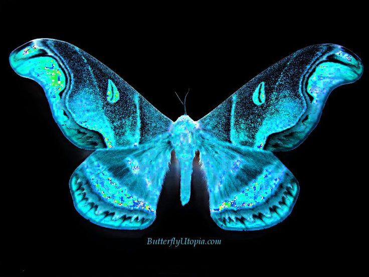 Free+3D+Desktop+Wallpaper+Screensavers | Free Butterfly Wallpaper, Wallpapers, Backgrounds, Desktop ...