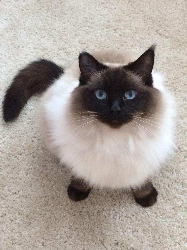 Feeling Cute Might Take A Poo On My Humans Carpet Later Idkhttps I Redd It J6ohbmsdot031 Jpg Cute Pet Adoption Animal Rescue