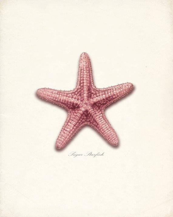 Vintage Sugar Star Sea Shell Wall Decor Print by vintagebytheshore, $14.00