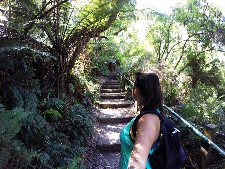 Kokoda Memorial Trail www.taylorstracks.com