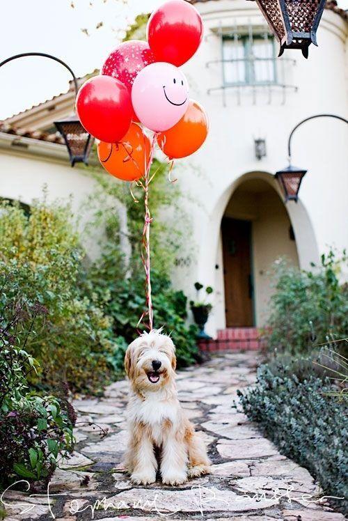 een hond met balonnen