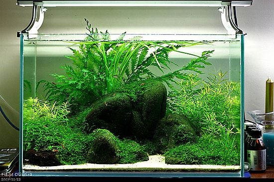 3 years of Aquascaping by FAAO - photo in the link is my fav :) Love the rounded rocks.