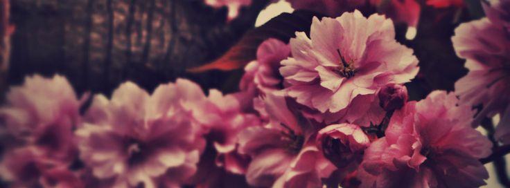 FBカバー写真:花の写真 330