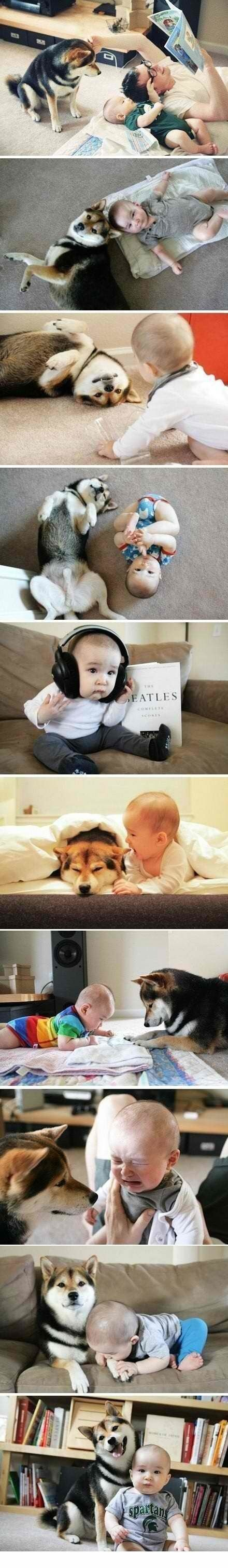 Baby and a shiba. Can't wait to see how our shiba  reacts to the baby.