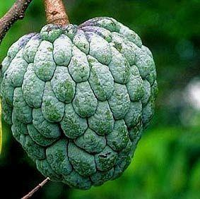 Pin by Avtar Singh Dhesi on Fruit Trees Pinterest