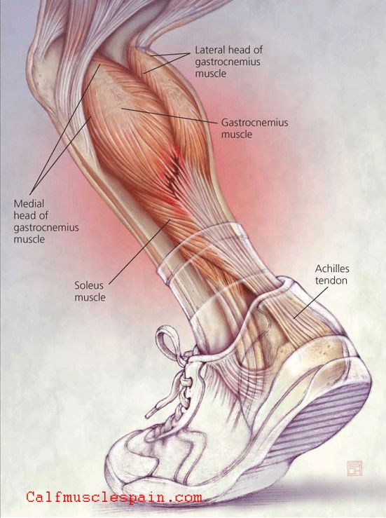 Anatomy of calf muscles