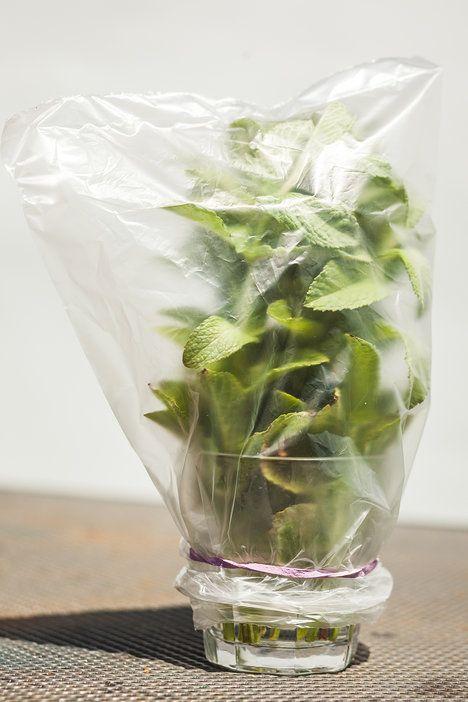 Bylinky vydrží díky této metodě uchování jako čerstvě utržené nejméně týden; Eva Malúšová