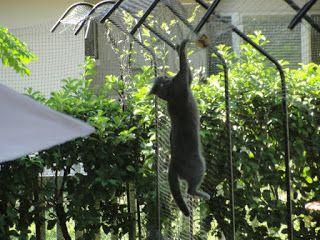 Gatos não devem ter livre acesso à rua, que oferece muitos perigos. Para quem mora em apartamento, é relativamente fácil telar janelas e var...