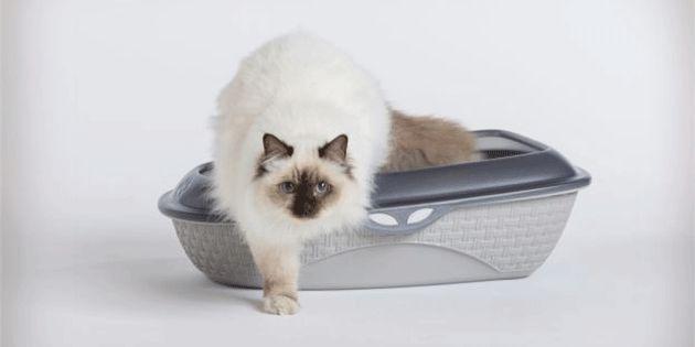 La lettiera, croce e delizia di ogni proprietario, rappresenta l'oggetto forse meno compreso e apprezzato, almeno fino a quando il gatto elimina pipì e feci al suo interno. Eppure conoscere q…