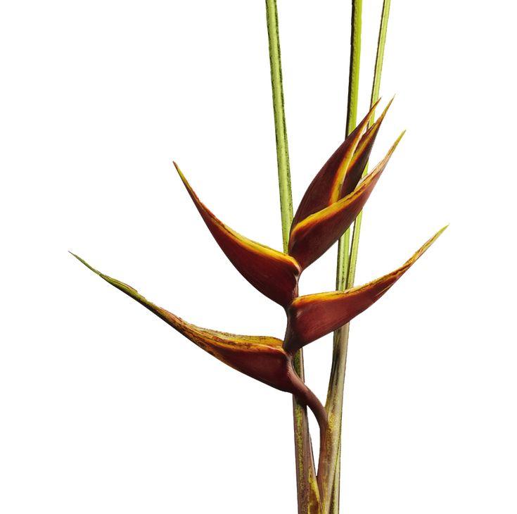 M s de 25 ideas incre bles sobre flores tropicales en for Vivero plantas tropicales