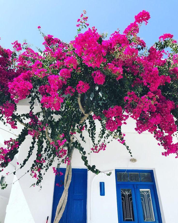 развитой цветы греции фото и названия призналась, что милана