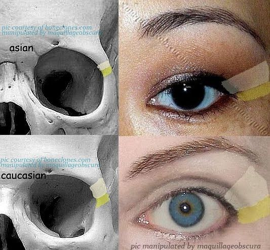 Difference Of Corner Of Eye In Asian And Caucasian -3045