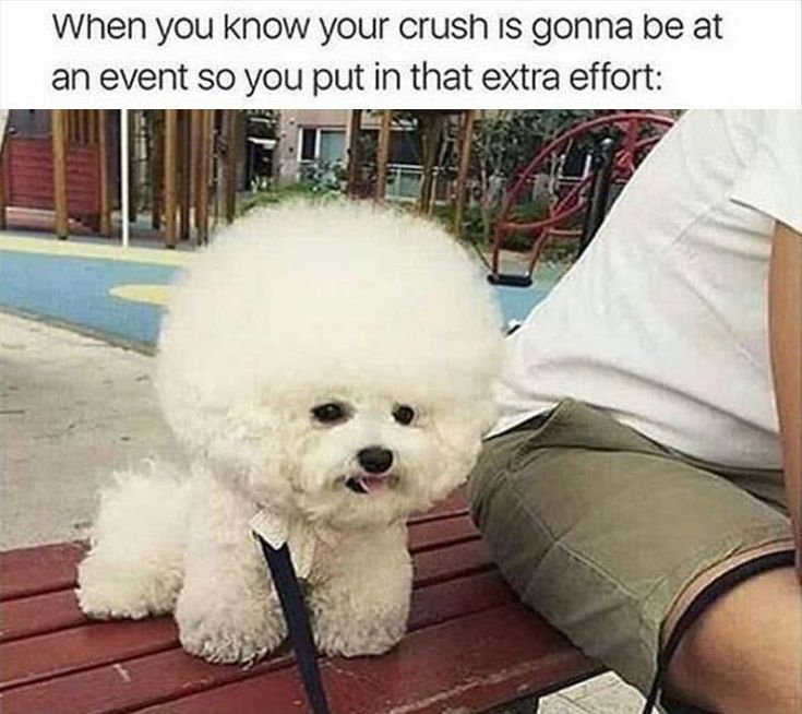 21 Funny Animal Memes And Pictures Of The Day