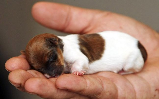 15 Of The Most Adorable Newborn Animals
