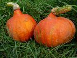 Zapečená dýně s jablky a tymiánem