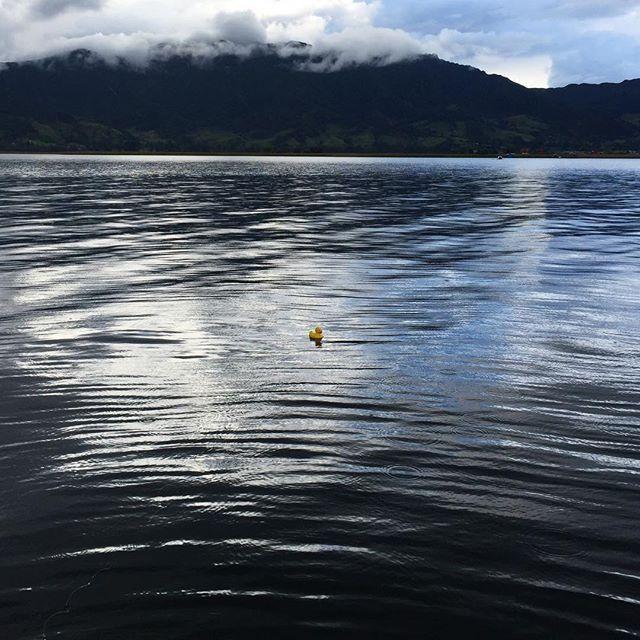 #ElPatoDeTriego en la Laguna de La Cocha, Nariño, #Colombia.