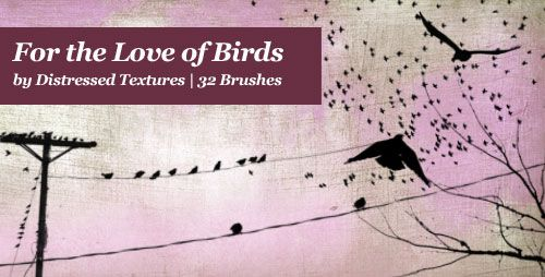 Distressed Textures   » Blog Archive   » Brushes   For the Love of Birds   Large High Resolution Textures and Brushes for Fine Photography and Photoshop Overlay