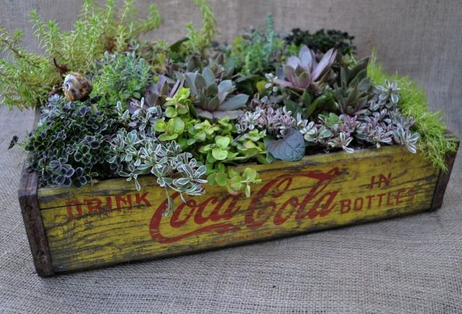 We have a vintage 7up bottle crate! I'll definitely have to plant succulents in it!