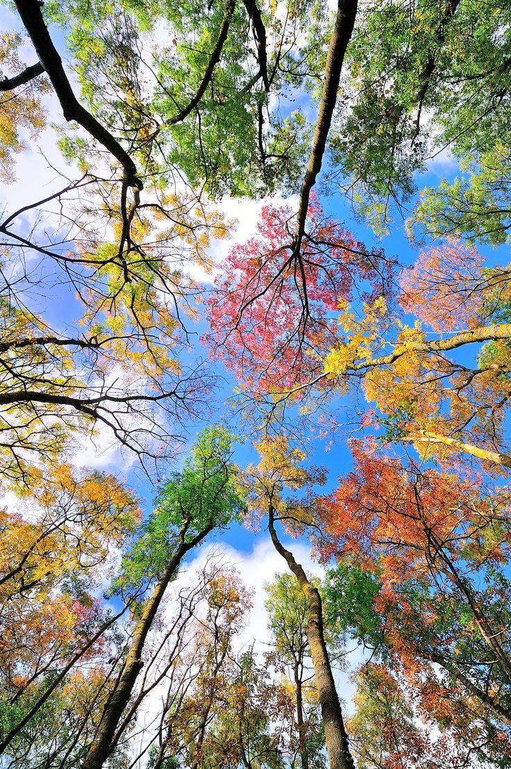 Картинки все времена года красивые природа