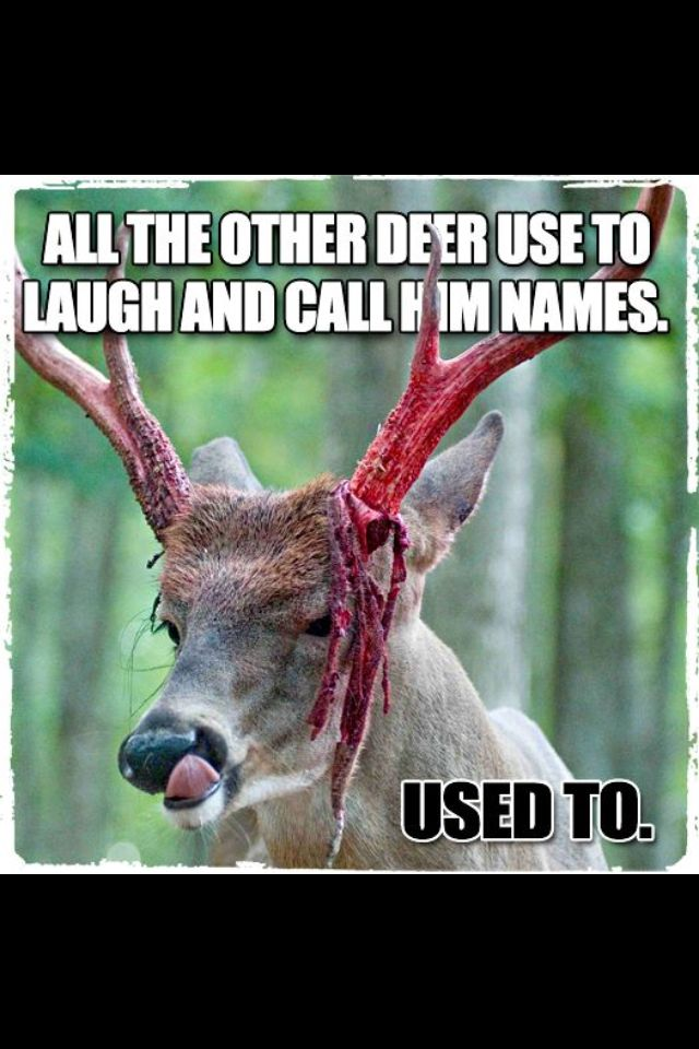 Funny Hunting Quotes New 109 Best Hunting Images On Pinterest  Hunting Stuff Deer Hunting