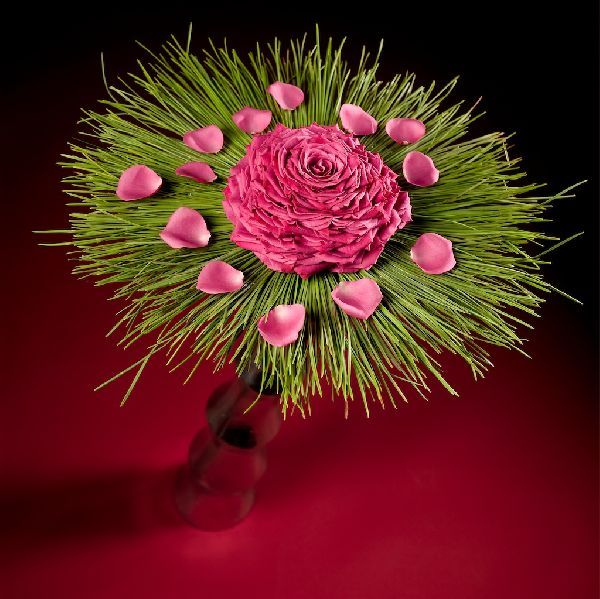 Striking hot pink rose glamelia by Daniel Ost