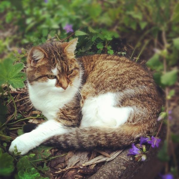 street cat rescue kansas city