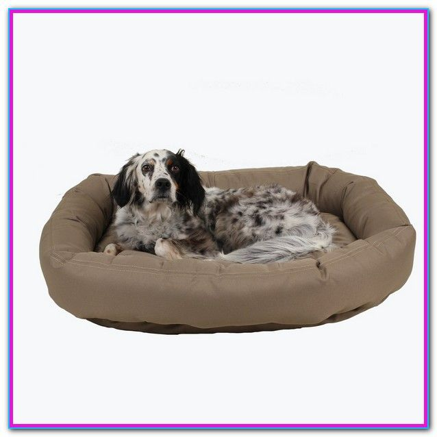 Best Rated Chew Proof Dog Beds Chew Proof Dog Bed Kong Plush Lounger The Kong Plush Lounger Dog Bed Might Fit The Bi Chew Proof Dog Bed Dog Bed Donut Dog Bed