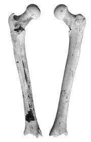Palaeoanthropology: Lucy's relatives walked upright : Nature : Nature Publishing Group