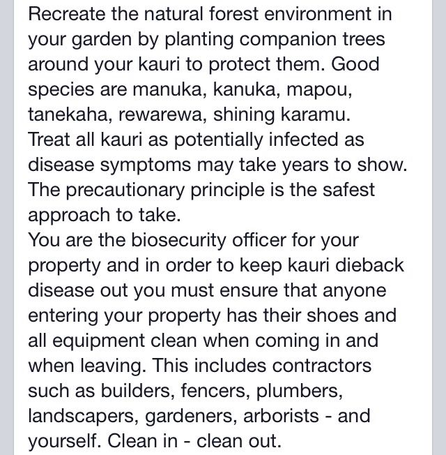 Care of kauri - Titirangi Ratepayers and Residents Association, and Auckland Council, June 2015 (2 of 2)