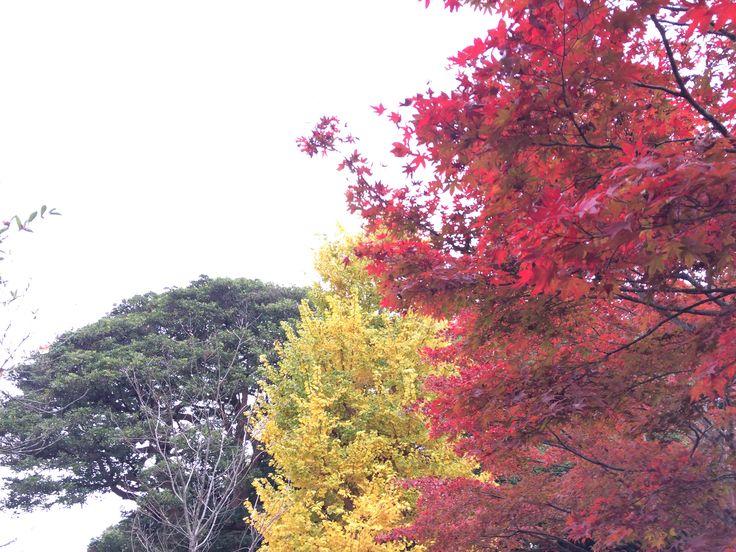 Autumn color at Genjiyama, Kamakura.
