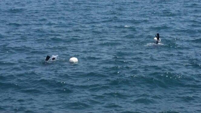 Female divers on Jeju Island