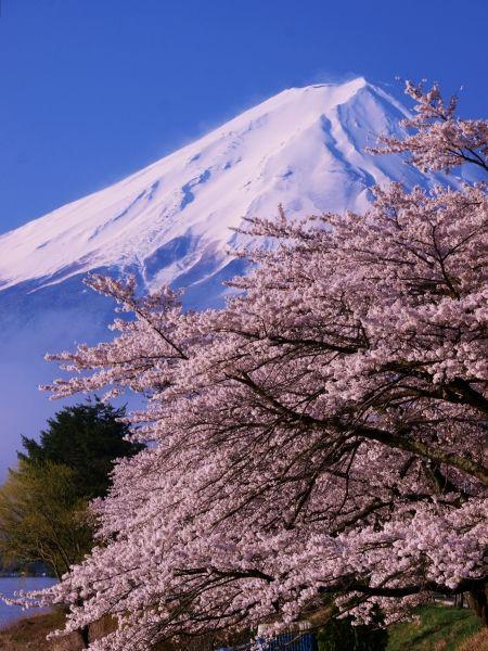 Fuji #japan #yamanashi #桜 #CherryBlossom