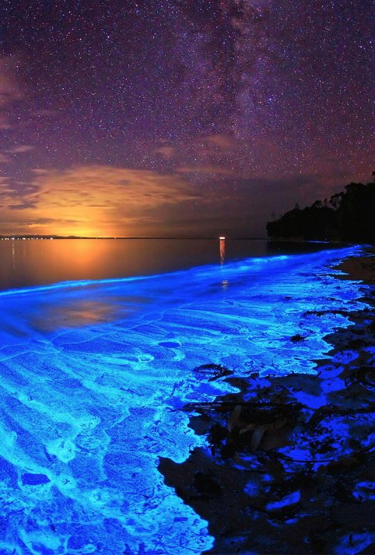 The bioluminescent noctiluca scintillans – an algae known otherwise as sea sparkle of australia's jervis bay, with milky way.