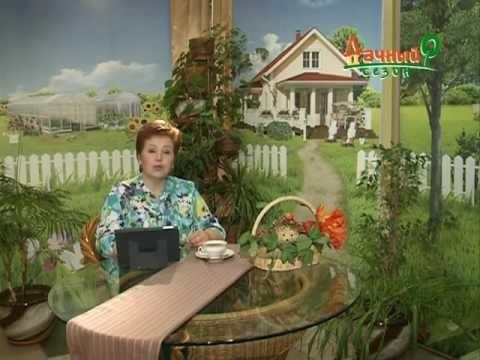 Дачный Сезон 11 06 2016 28мин 54сек