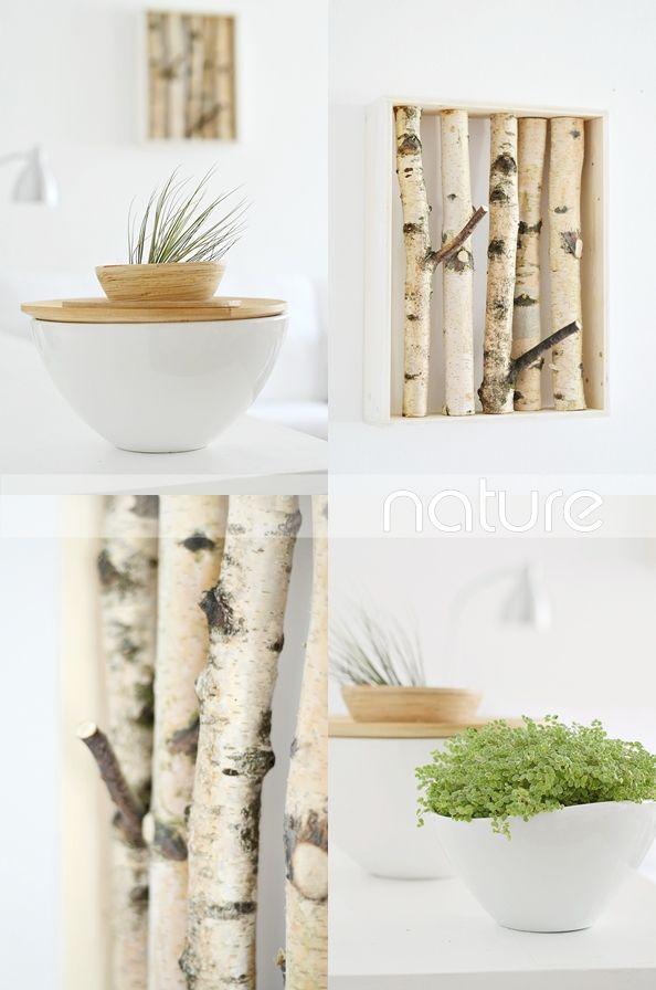 Die Natur 19 best birch images on