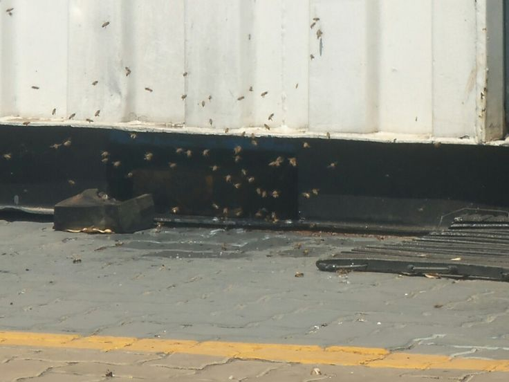 Bee removal in Johannesburg, removed bees on  a shipping  container  .Roodepoort .R650 Flat rate