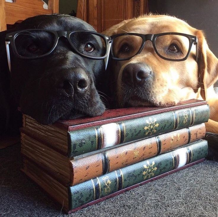 """Will you read us a story?"""