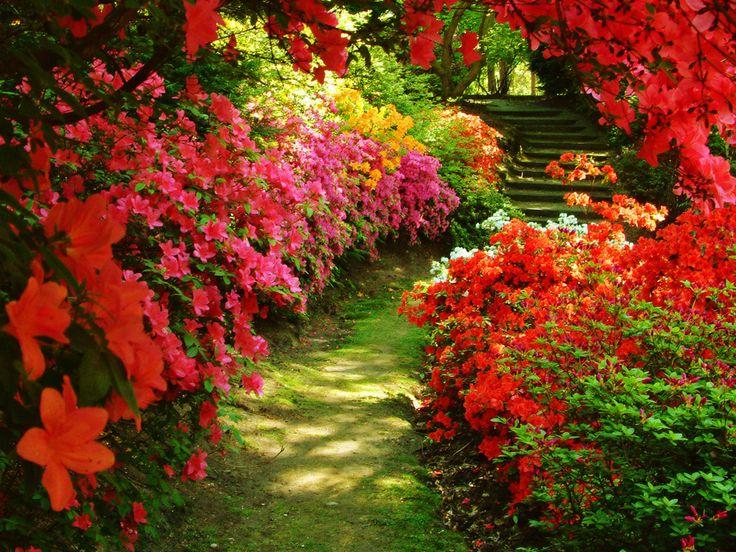 Best Gardens Images On Pinterest Gardens Garden Ideas And - Colorful flower garden background