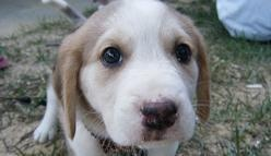 Super Bowl Puppy Cam Is Here -- and It's Too Cute For Words [VIDEO]