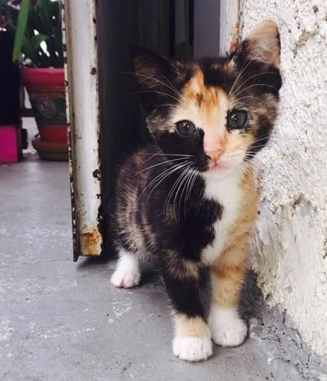 ... just you just adore the calicos .. of ALL my cats that I've had ... I never had calicos. ... I volunteer at local no-kill shelter & lots of cats but calicos are adopted before we get them ... people want them ... I wish that they would love all the others too ... Callies are cute!