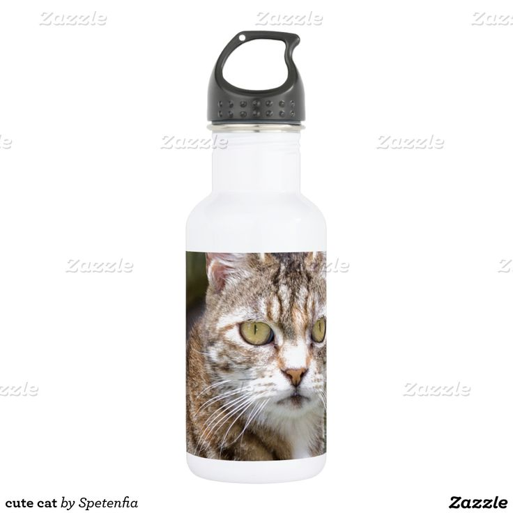 cute cat 532 ml water bottle