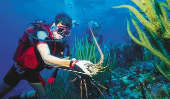 Florida lobstering| Scuba Diving Magazine