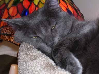 Himalayan cat green eyes